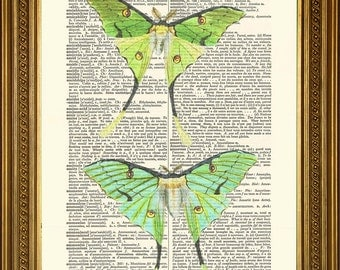 "GREEN LUNA MOTHS: Beautiful Moon Moth Vintage Dictionary Book Page Antique Art Print Wall Hanging Gift (8 x 10"")"