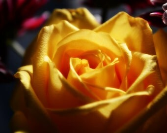Yellow Rose Digital Photograph - Instant Download