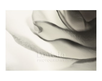 White Flower Photo, Rose Petals, Home Decor Ideas, Large Wall Art, Black and White Photography, Floral Photography, Dove Gray Grey