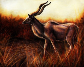 Original - African Greater Kudu Pastel Painting Drawing by Danielle Trudeau Africa Fine Art
