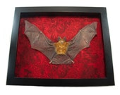 Taxidermy Animals Framed Bat Taxidermist Art Cabinet of Curiosities Wall Hanging