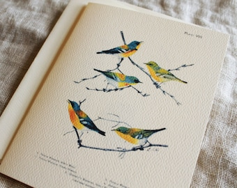 Birds Blank Notecards 10 Folded Cards With Envelopes