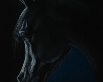 Horse portrait - soft pastel drawing