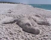 Printable, Florida Gator Sand Art Sculpture, 4 Sizes, Nature Photography, Photo Art