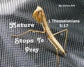 Praying Mantis, Nature Stops To Pray, 8 X 10 Instant Digital Download