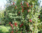 Apple Country2 8 X 10 Instant Digital Download