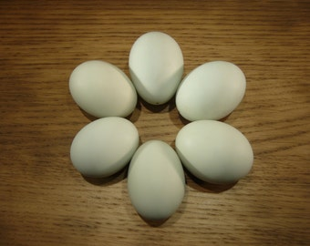 Six pale blue hen eggs - blown for crafts or display