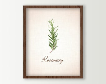 Food Art - Rosemary Leaves Culinary Prints - Kitchen Art - Herbs Kitchen Decor - Green Kitchen Decor - Cooking Herbs Wall Art - Kitchen Sign