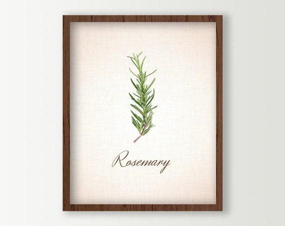 food art rosmarino foglie culinaria stampe cucina art decor di cucina erbe