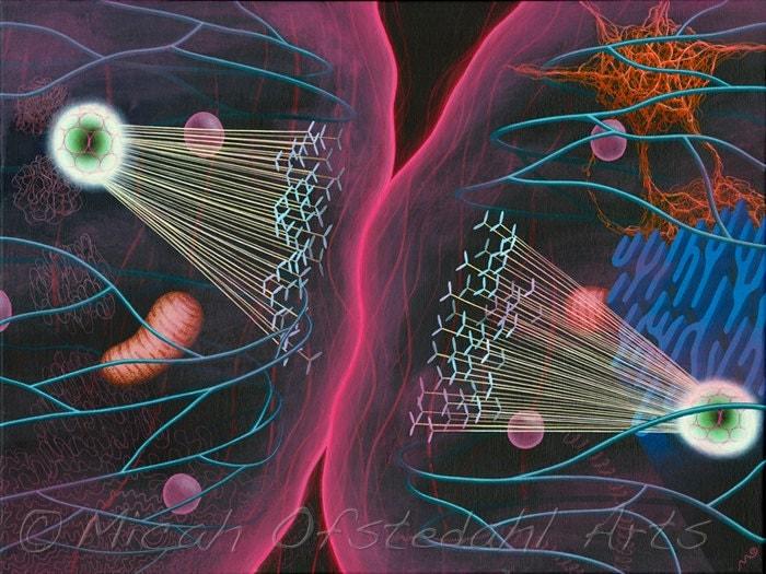 Cell Biology Art | www... Cell Biology Art