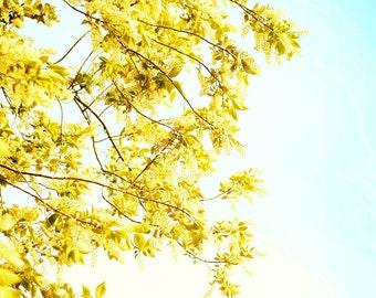 Photography Fine Art Print, Leafy Sky Large Wall Decor, Teal & Yellow Home Decor Print- Light Breeze