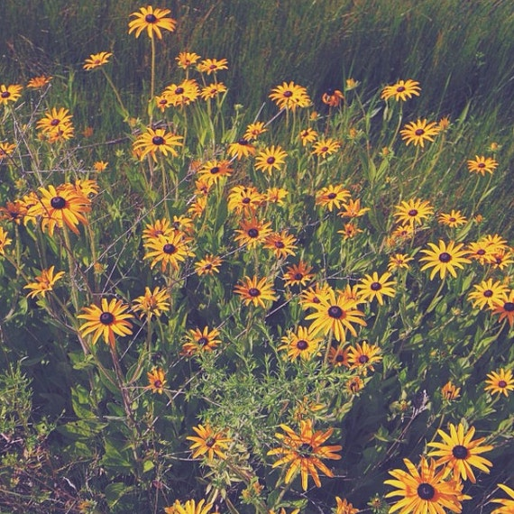 Items similar to Vintage flower field photography, black ...