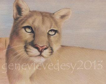 8x10 Print - Puma Art Print - Wildlife art print of a puma drawing, 8 x 10 in