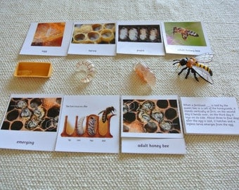 9 Sets of Montessori Life Cycle 5 Parts Cards with Miniatures
