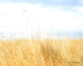 Yellow Nature Photography, Rustic Wall Art, Golden Countryside Photo, Country Decor, New Zealand Photo, Blue and Yellow Photography