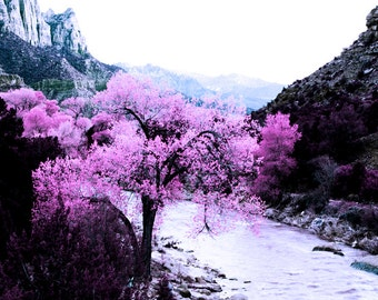 Zion Photography, Romantic Photo, Zion Pink, Zion Wall Art, Zion Decor, Zion Photos, Pink Landscape, Zion Trees, Zion Prints, Fine Art, Art