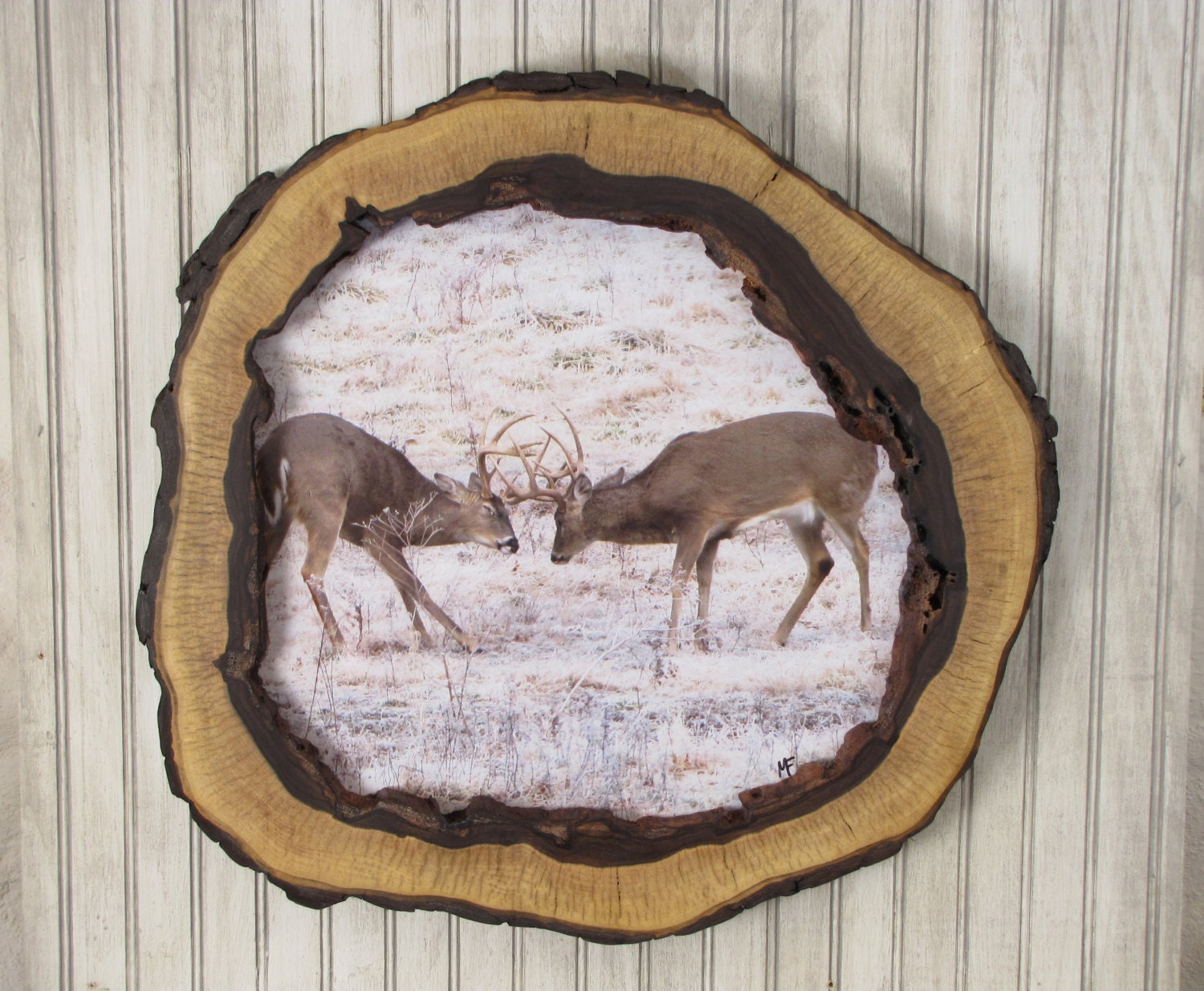 Hollow log picture frame walnut tree slice photo frame for Hollow tree trunk ideas