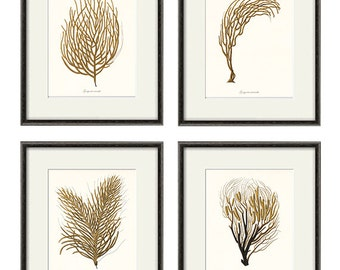 Sea coral art print Nautical art print set of 4 antique wall art Victorian art Ocean art print beach art Home decor wall art Sea art print