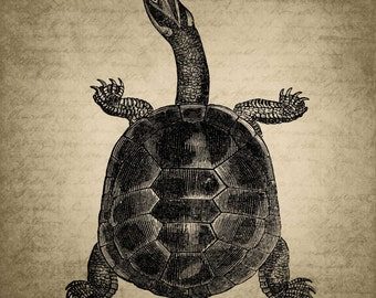 Vintage Animals Sea TurtleDigital Canvas Collage Sheet Download Fabric Illustration Picture Art