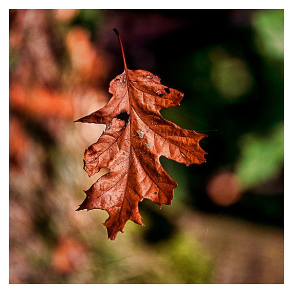 Rustic Autumn, Fall Leaf photograph, Wall Decor, brown, minimalist nature photography, rustic, green