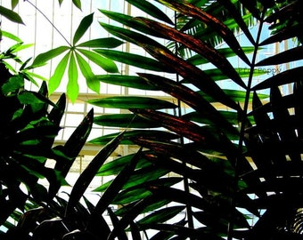 Tropical Green Leaves Print / Vibrant Leaves / Sunlight / Nature Photography / Wall Art / Home Decor / fpoe / Green / Summer Decor