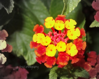 flower macro nature photography