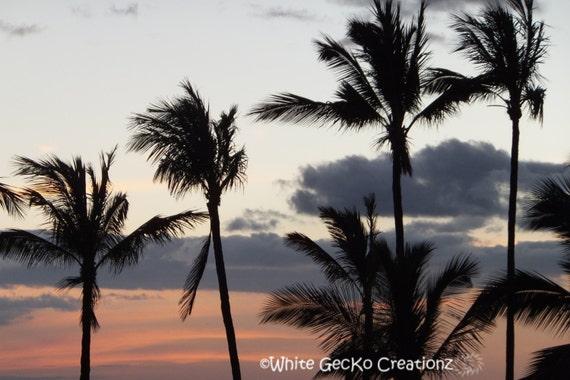 Palm Trees, Hawaii, Sunset, Beach