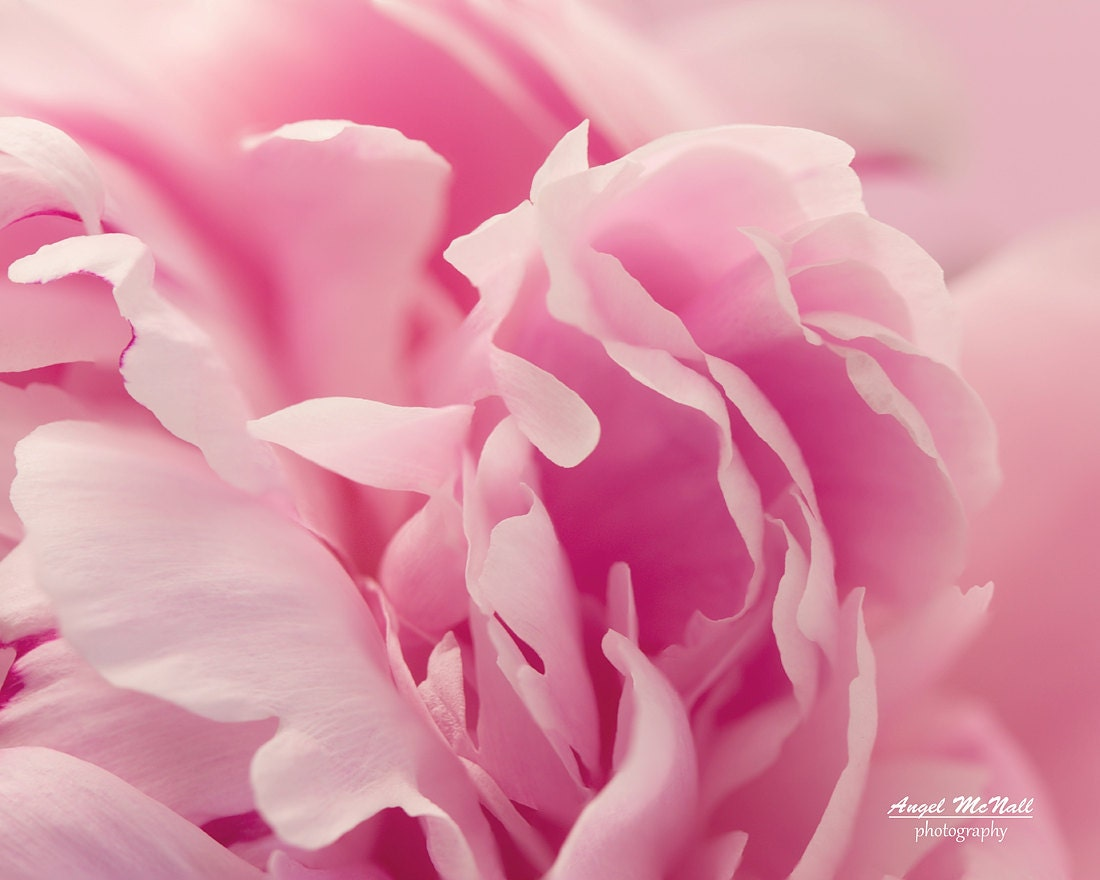 Pink Peony Girls Room Baby Boho Flower Photography