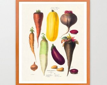 The Vegetable Garden - Garden Art - Garden Illustration - Garden Poster - Kitchen Poster - Kitchen Art - Beets - Turnip - Carrots - Onion