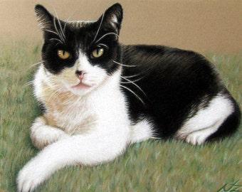 Tomcat - Fine Art Print
