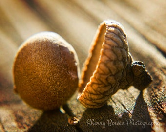 Acorn Photography, Nature Photography, Autumn, Fall, Oak Tree, Nut, Fine Art Photography