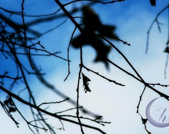 Nature Photography.  Winter Leaf Photography. 8x12 Print