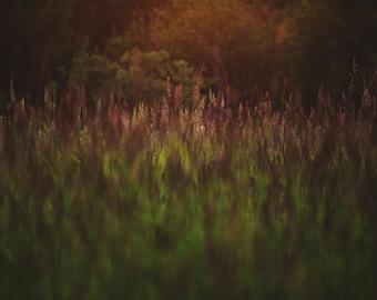 Summer Light Photography Print