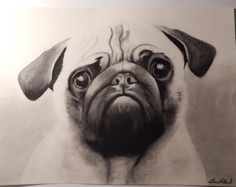 Pug Charcoal Drawing 11x17