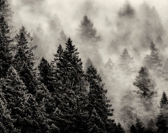 Landscape Photography, Trees and Fog, Pines, Hood Canal, Mount Walker, Fine Art Black and White Photography, Wall Art, Home Decor
