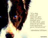 Wonderful prints of beautiful dogs with inspiring words of wisdom...