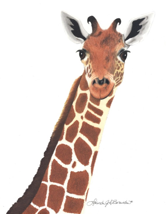 Girafe photo r aliste art dessin illustration papier - Dessins girafe ...