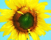 Dylan's Sunflower Giclee Print 10x10