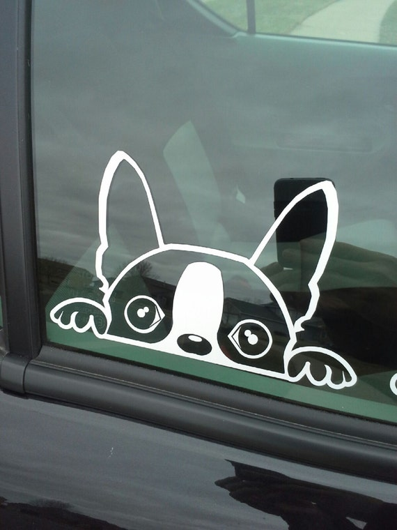 The dex g boston terrier window decal for Window transfers