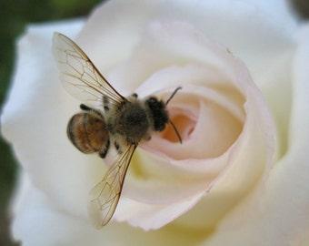 Rose Bee