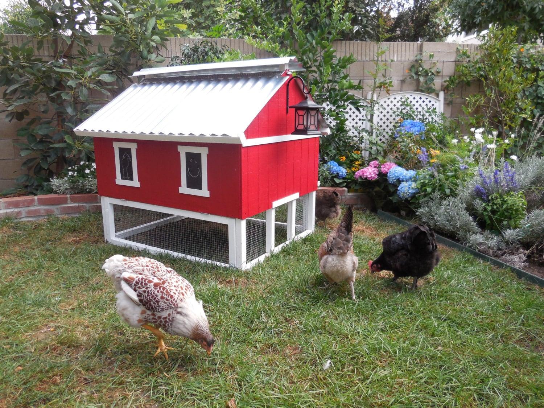 Easy clean chicken coop for Quick chicken coop