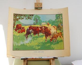 Original Vintage School Poster, 1930s, Cows and Calf