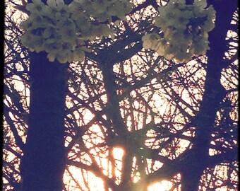 Boho Blossom Print