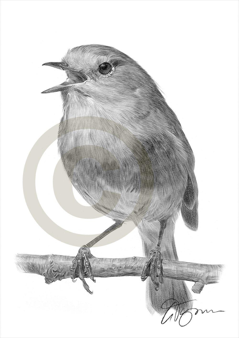 Matita di robin pettirosso uccello disegno opera di formato - Semplici disegni di uccelli ...