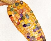 Indian Corn watercolor painting original, kitchen decor  5 x 7 corn Illustration, small wall art, corn art, Modern minimalist,