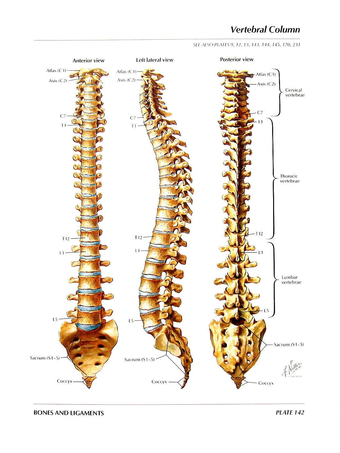 Human spinal column anatomy 5753112 - follow4more.info