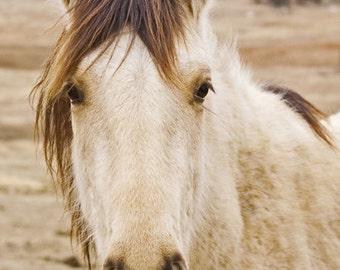 Horse Photograph, Wild Mustang, Equine Print, Nursery Decor, Childrens Room, Wildlife Print, Cream Brown, Western Decor, Fine Art Print