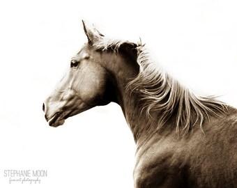 Horse Photography, Wild Horses, Wild Horse Photography, Fine Art Equine Photography, Sepia Horse Art Print