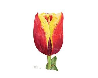 Tulip Watercolor Print, 8 x 10