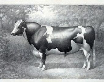 antique victorian bull farm animal lithograph digital download